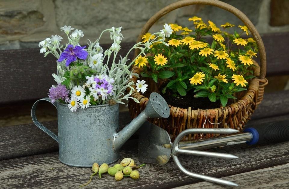 Création d'un beau jardin : quelles plantes et fleurs choisir ?