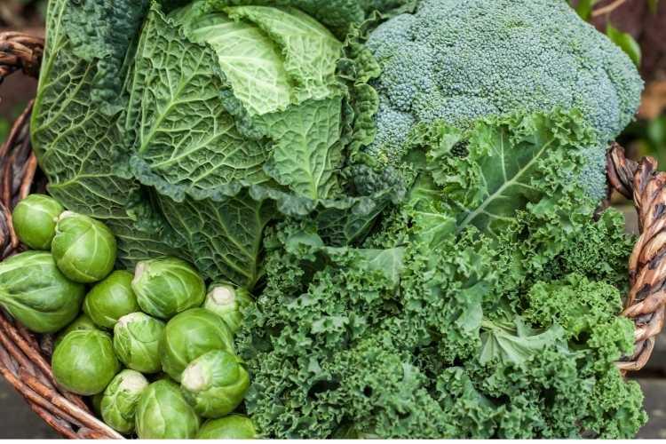 Quels sont les légumes à récolter au jardin en hiver ?